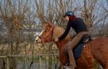 Intensivtraining für Sie und Ihr Pferd